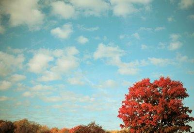 Amid October 069a