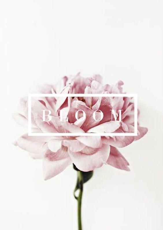 Bloom5
